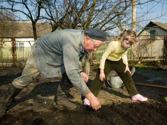3824060-an-old-peasant-working-in-his-kitchen-garden-and-his-little-granddaughter-helping-him