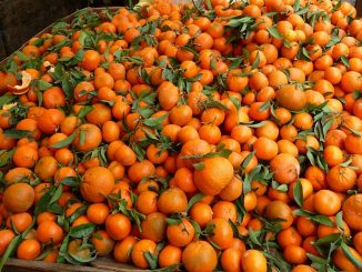 new_year_wallpapers_tangerine_background_088781_