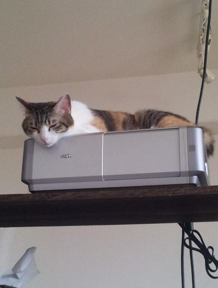 office-cats5